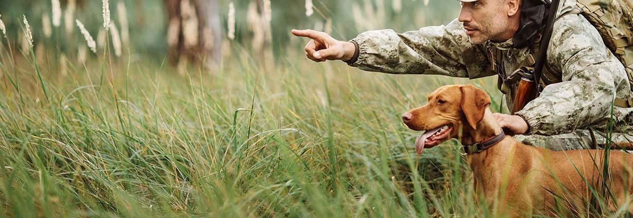 prochasse-banniere-boutique-chien (1)
