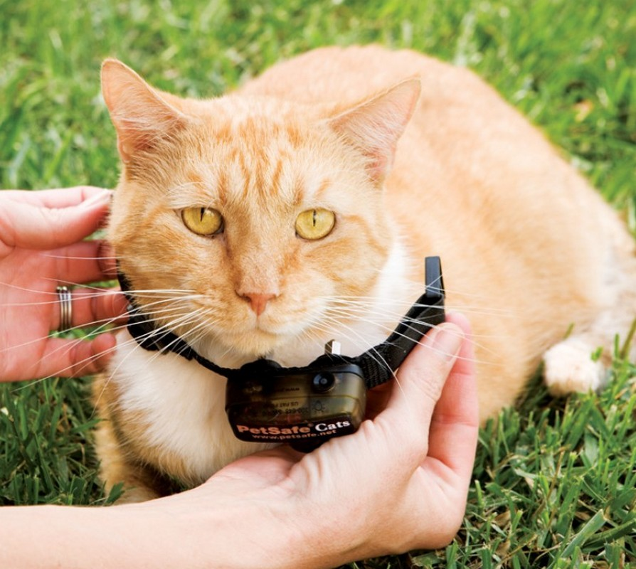 Collier anti fugue chat efficace