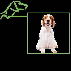 Équipement des chiens de chasse