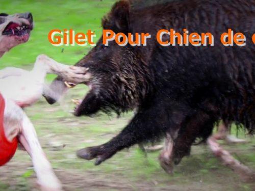 Gilet Pour Chien de chasse