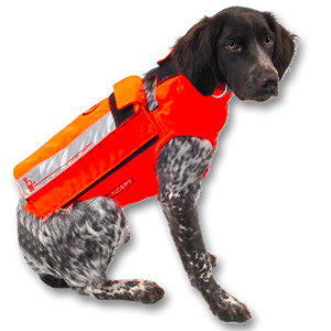 Chien Chasse : GILETS