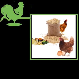 Soins & Compléments Alimentaires Pour Poules